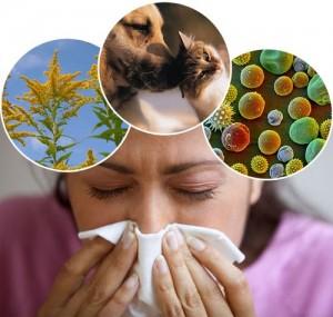 Cải tiến Hoắc đởm hoàn giúp chữa viêm xoang viêm mũi dị ứng 1