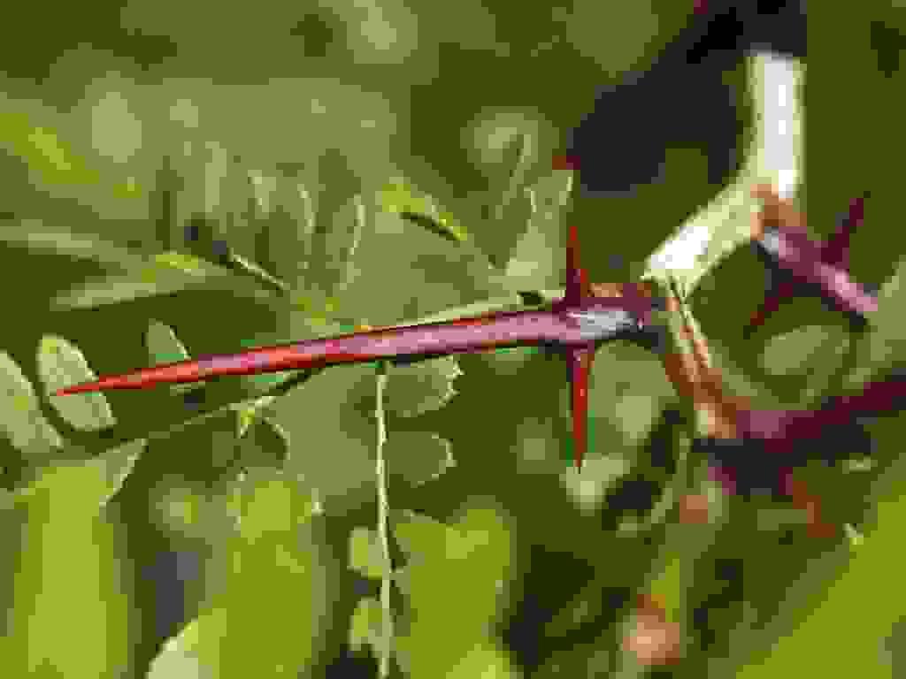 Phép màu đến từsản phẩm thảo dược đặc biệt 1