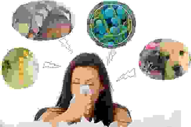 Viêm mũi dị ứng là gì 1